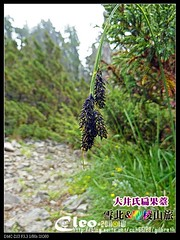 P201107Xue_0433 (Cleo,Huang in TW) Tags: hiking mountainclimbing taiwan   sheipanationalpark  201107 panasoniczs3 mtxue