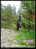 P201107Xue_0433 (Cleo,Huang in TW) Tags: hiking mountainclimbing taiwan 台灣 雪山 sheipanationalpark 雪霸國家公園 201107 panasoniczs3 mtxue
