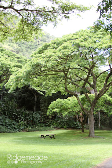 Waimea Falls Park 14 Canopy Trees
