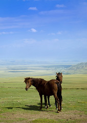Horses In The Steppe, Saralasaz Jailoo, Kyrgyzstan (Eric Lafforgue) Tags: horses horse nature animal vertical clouds landscape mammal cheval asia exterior wildlife horizon bluesky nopeople pasture centralasia kyrgyzstan steppe colorphoto kyrgyzrepublic 1410 saralasazjailoo
