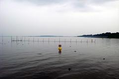 Die Mritz bei Klink (onnola) Tags: lake marina germany deutschland see wasser hafen reuse mecklenburg mecklenburgvorpommern klink mritz yachthafen waren mecklenburgwesternpomerania bownet seenlandschaftwaren