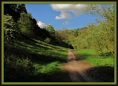 Looking back-Tideswell dale (Dazzygidds) Tags: colour reflections derbyshire tranquility ivy foliage textures tideswell cinematic backlighting millersdale riverwye marshmarigold lightandshade tideswelldale limestonecliffs beautifulshadows peakdistrictvillage tidesewelldale