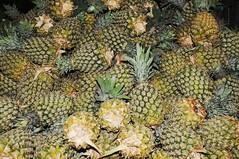 Bali Ubud - Markt, Basar (146) Ananas (Chironius) Tags: bali indonesien indonesia frucht fruit frutta owoc fruta фрукты frukt meyve buah lebensmittel commeliniden süsgrasartige poales bromeliengewächse bromeliaceae ubud