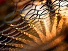 golden rays (marianna armata) Tags: leica sunlight canada fence lumix golden wire quebec bokeh montreal circles perspective panasonic chainlink summicron g1 rays marianna f20 armata photographymypassion mariannaarmata