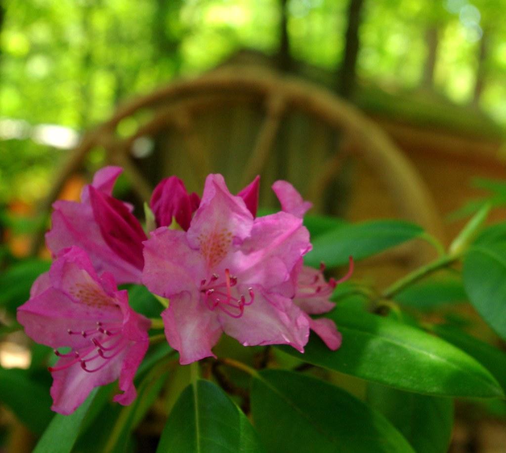 Blooms in Wheel   Feliz Fifth!