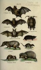 Anglų lietuvių žodynas. Žodis sorex palustris reiškia <li>Sorex Palustris</li> lietuviškai.