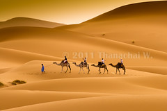 Travelling with Camels VIII (Beum Gallery) Tags: voyage africa travelling sahara sand desert dunes dune sable riding camel morocco journey maroc getty maghreb camels gettyimages afrique dsert merzouga nomade dromadaire chameau ergchebbi chameaux dromadaires  saharaoui       absolutegoldenmasterpiece       availableforlicenseongettyimages