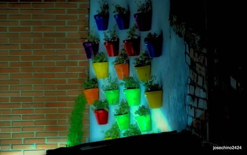 Macetas en la noche