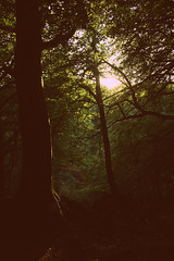 Burrator Reservoir (srbenney) Tags: trees sunset woods warmth forst