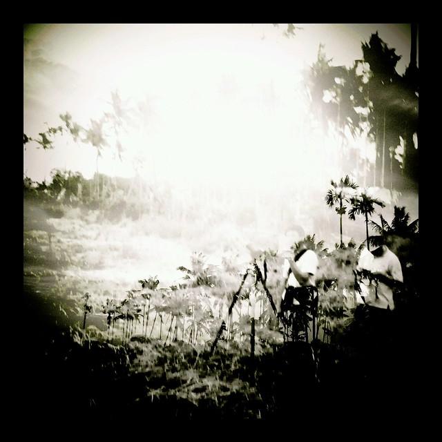 螢火蟲戰場