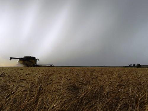 Harvesting afar
