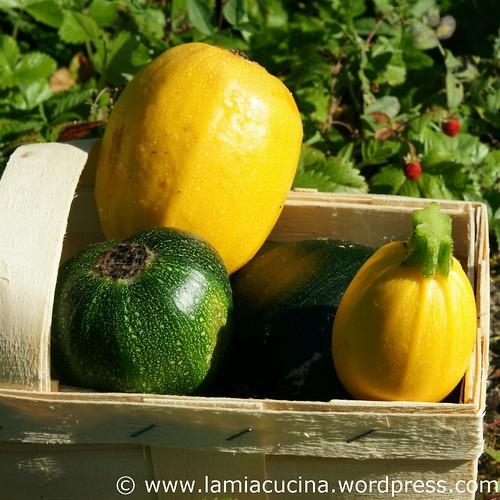Zucchinikuchen 1_2011 08 01_5252