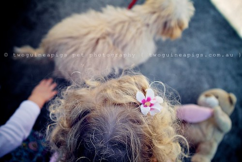 Hair by twoguineapigs pet photography