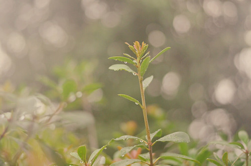 Hazy Bokeh Wednesday....