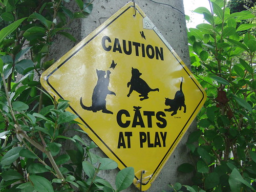 """Cartel: """"Caution. Cats at play"""""""