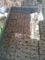 Soil blocks