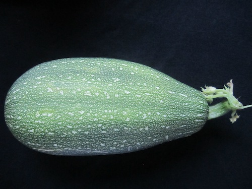 Zucchini #7