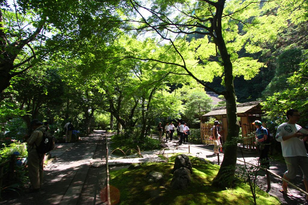 Kita Kamakura Hydrangea spot (1)