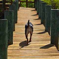 guardian (Laurarama) Tags: family summer dog dock path petportrait odc gettycollection letmeoffofthiscrazything gapaug collectionp