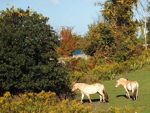 the sweet horses