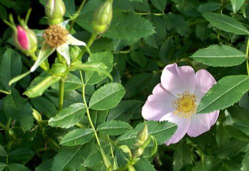 Flower_7211c
