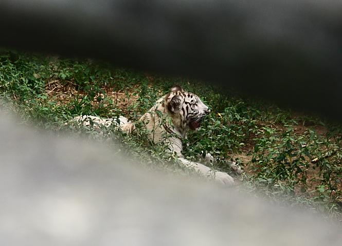 六福村動物園014