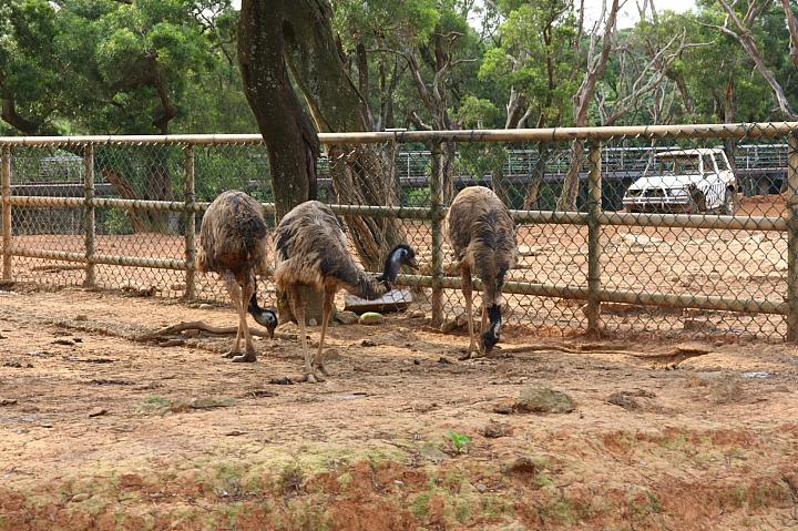 六福村動物園060