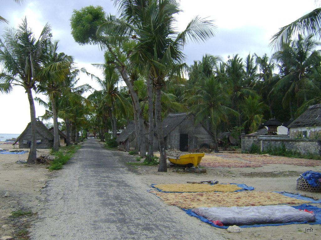 Road to mangroves