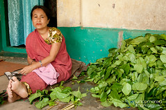 Woman and Betel Leaves in Khashia Village - Outside Srimongal, Bangladesh (uncorneredmarket) Tags: people bangladesh indigenous betel dpn srimongal betelleaf betelleaves khashia khashiavillage