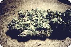 (The Prof.) Tags: home yummy weed pentax hell bud marijuana grown chronic nugget dank chron niglet nug k10d nuglet chronster theprimeprof nixi
