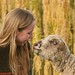 Simpáticas ovelhas!!