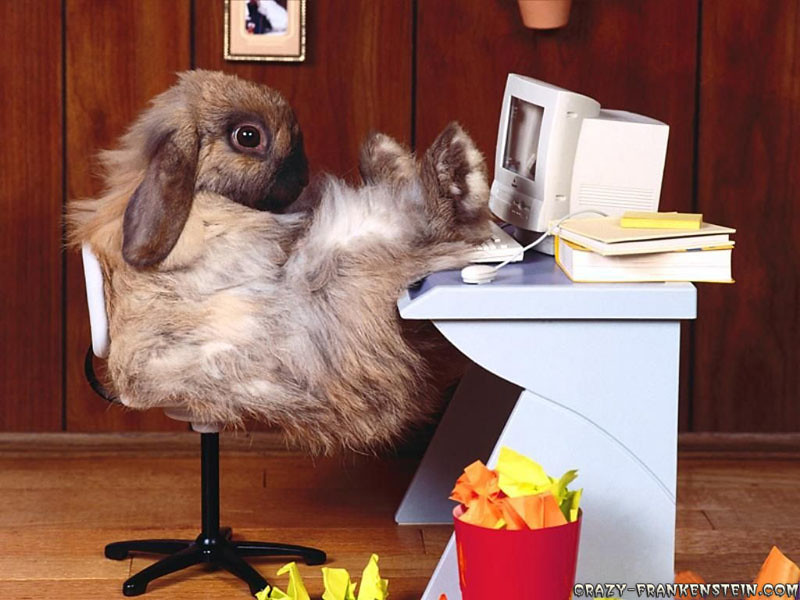 funny-wallpapers-rabbit-at-work