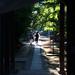 初夏の参道