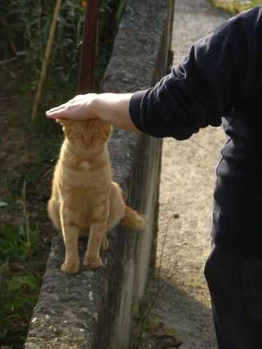"""""""Garfield"""" el gato de mi suegra"""