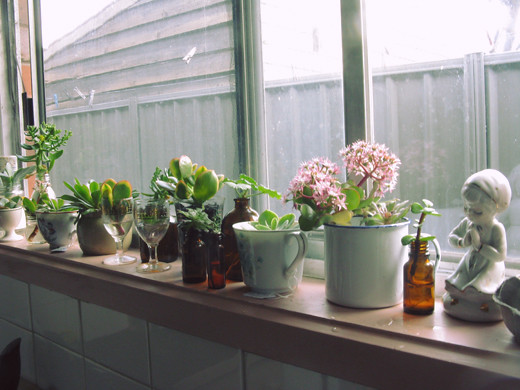 succulents on the windowsill