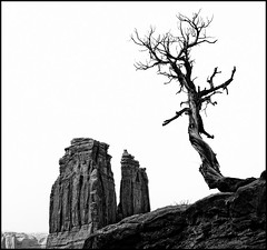 The Organ (*Glueckskind*) Tags: blackandwhite bw usa tree nature rock landscape utah sand natur arches moab archesnationalpark amerika schwarzweiss landschaft baum felsformation courthousetowers canon40d