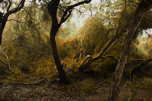 Sulphur Trees