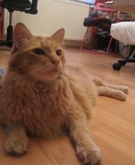 bdaygirl (nasharz) Tags: catnipaddicts