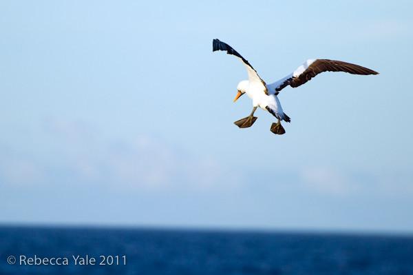 RYALE_Galapagos-146