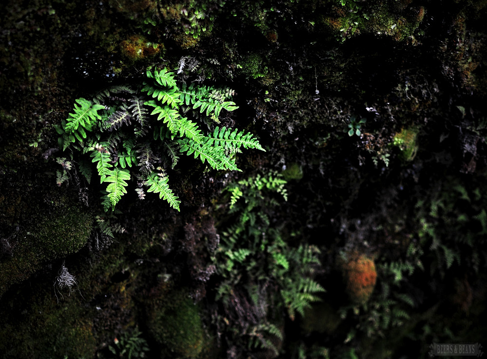 iceland fern smallerforBnB