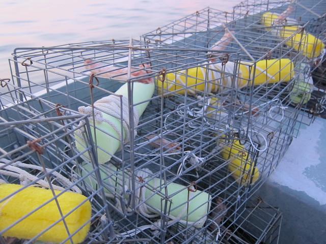 Crabbing et al 015