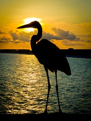Destin Island(Explored) (Ricymar Photography(Thanks Everyone!!!!)) Tags: desktop sunset wallpaper bird art beach club clouds photography martha background fine free explore swamp ricardo wallpapers destin desktopwallpaper nationalgeographic serrano desktopbackground desktopwallpapers desktopbackgrounds explored ahinga mangual freewallpapers ricardomangual marthaserrano ricymar ricymarfineartphotography