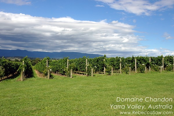 domaine chandon yarra valley australia (01)