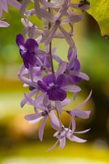 Anyone know the name of the flower? (nemi1968) Tags: flowers flower macro june oslo closeup canon outdoor botanicalgarden botaniskhage ef100mm macro100mm excellentsflowers canoneos60d fleursetpaysages
