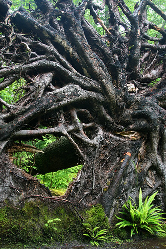 root sculpture