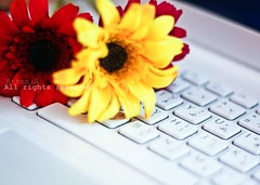 (Bthon) Tags: red white flower love yellow you sony u luv vaio miss     i