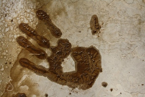 Muddy Print