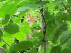 Lo scoiattolo mi ha notata, sta fermo