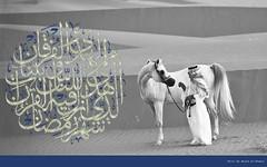Ramadan Wallpaper (Majed Al-Shehri   ) Tags: bw horse festival photography mac explore saudi about arabian ramadan majed islamic mubarak        shehri                khalediah  alshehri  shehrim imajed  athbah