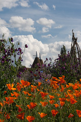 Oast Houses (Sally Dunford) Tags: sissinghurst kent sally sweetpeas canon50mm oasthouse oasthouses canon400d californispoppies